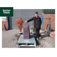 Natural Slate Monolith Water Feature in Plum Slate: Pre-Drilled - 1070mm High