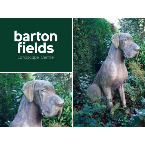 Great Dane Dog in Aged Cotswold Colour - Height 1150mm